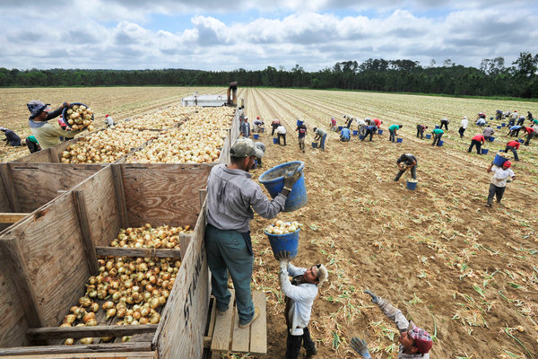 Workers Claim Race Bias as Farms Rely on Immigrants
