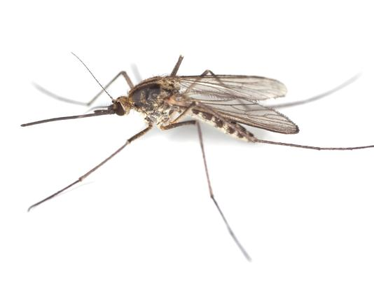 What Makes You So Tasty to Mosquitoes?