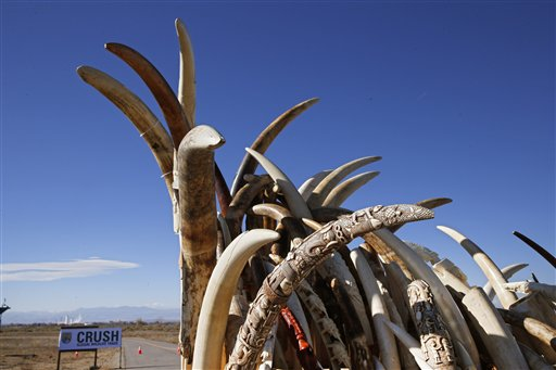 US to Crack Down on Ivory to Protect Elephants