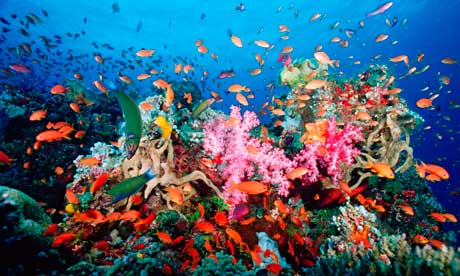 Coral Reefs Yield New Proteins to Tackle HIV