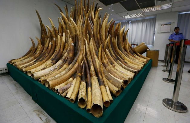 Hong Kong Starts Destroying Ivory Cache