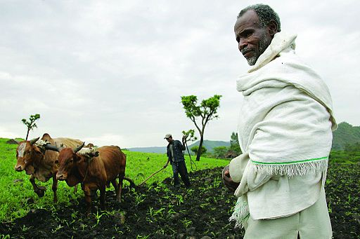 Corporations, U.S. Join Forces to Aid African Farmers
