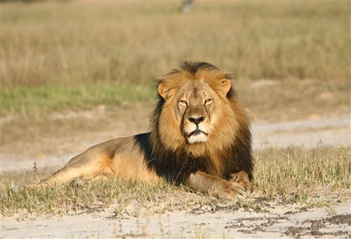 Zimbabwe Man Charged for Helping to Kill Lion Illegally