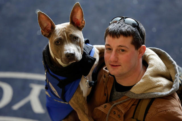 Assistance dog Zen, a pit bull, allowed former U.S. Marine Joe Bonfiglio, diagnosed with post-traumatic stress disorder, to enjoy everyday activities. Zen helps calm Bonfiglio when he feels the onset of a panic attack. (AP Photo/Richard Drew)
