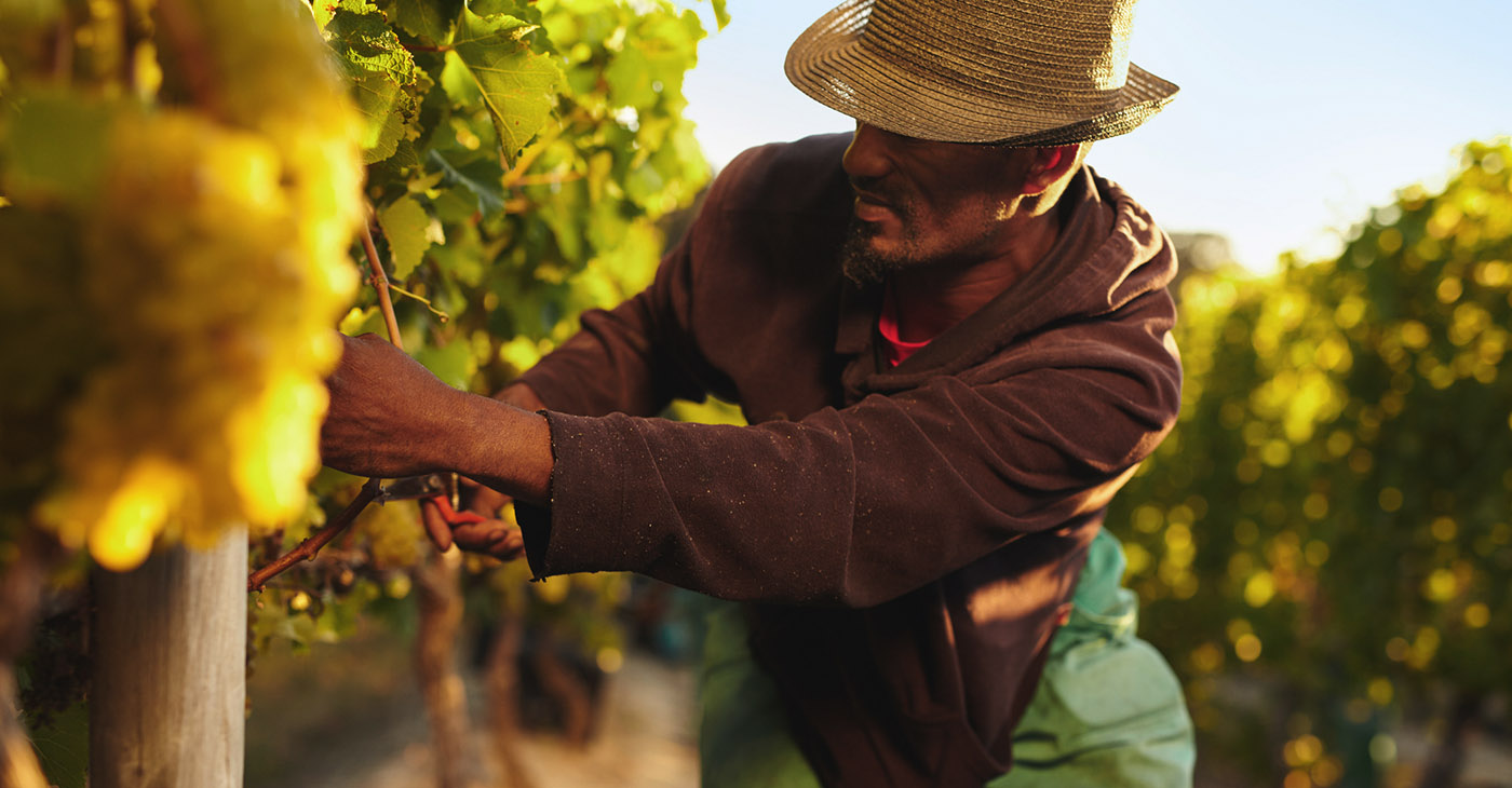 The loss of black farmland has had a profound impact on rural black communities, which today suffer from severe economic challenges, among them a poverty rate twice that of rural white communities. (Photo: iStockphoto / NNPA)
