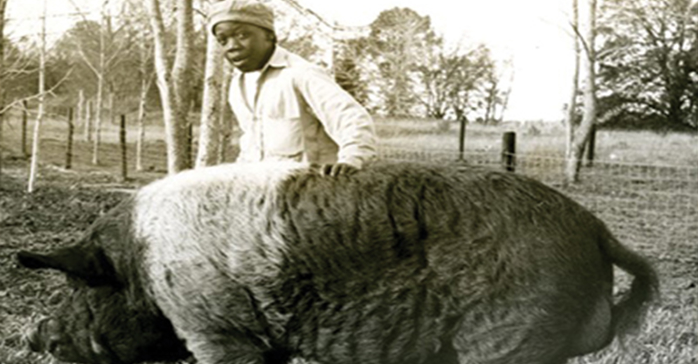 A man named Johnny Lee Gaddy recently shared with peonage researcher, Dr. Antoinette Harrell, that in 1957 he witnessed African American children being literally fed to the hogs that were on the campus of the infamous Arthur G. Dozier Reform School in the Florida Panhandle.